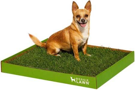 Doggielawn real grass potty