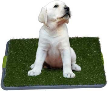 Sonnyridge easy dog potty