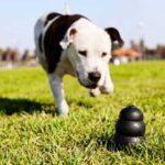 best dog toy