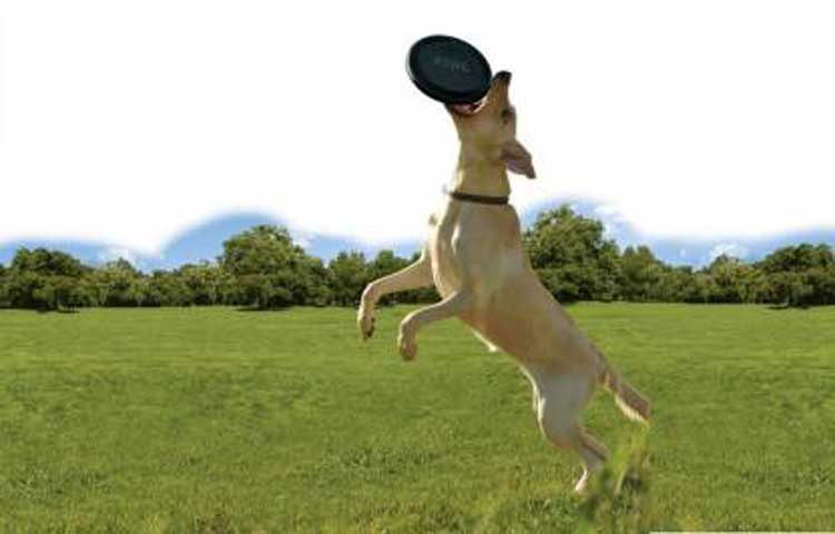 Kong Rubber Flyer Frisbee Dog Toy