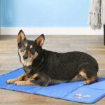 best dog cooling mat